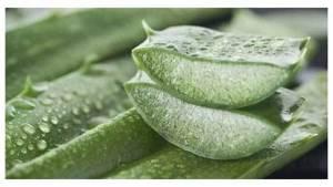 Лечение эндометриоза народными средствами: отзывы, сборы трав