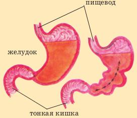 Как происходит пищеварение у человека?