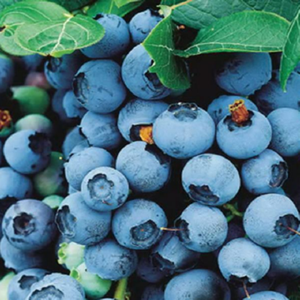 Пищевые красители (Е100 - Е199) - Что мы знаем о них?