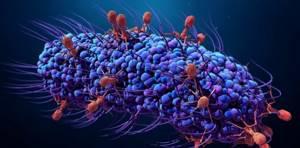 Что такое микробы и чем они отличаются от паразитов?