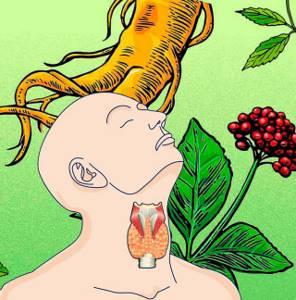 Сборы лекарственных растений для лечения зоба