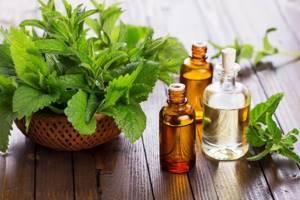 Мята: 11 фактов пользы этого растения для здоровья