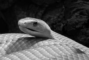 9 видов опасных паразитов обитающих в тропических странах