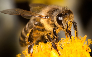 Укусы насекомых: От болезней и яда до анафилактического шока