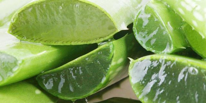 Рецепт народной медицины для лечения стоматита