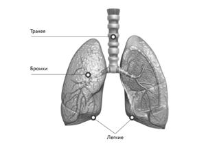 Как вылечить астму народными рецептами?