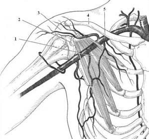 Почему немеют руки: 9 причин онемения и покалывания в разных частях тела