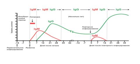 Инфекция? 13 тестов, которые делаются для диагностики инфекционных болезней