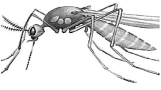 Что такое малярия: Причины, симптомы и лечение этой опасной инфекции