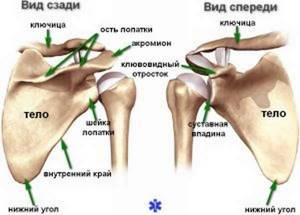 Переломы лопатки