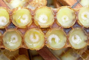 Лечение простатита продуктами пчеловодства