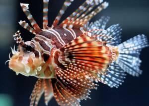 Морские животные с ядом для защиты или нападения