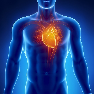 Вред никотина и окиси углерода для сердечно-сосудистой системы
