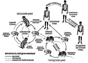 Чума (pestis, лат.; peaque, англ.)